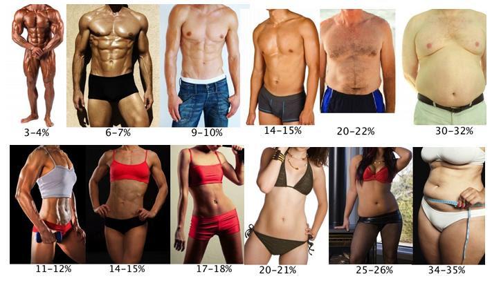 egészséges aránya a testzsír leépítéséhez)
