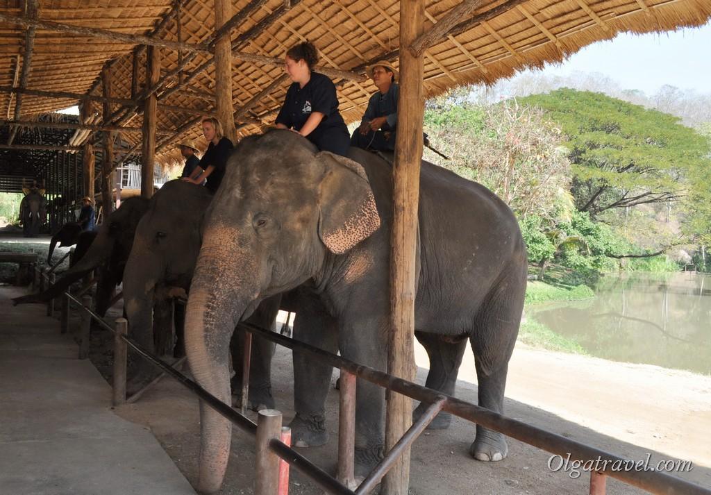 súlycsökkentő tábor Chiang Mai