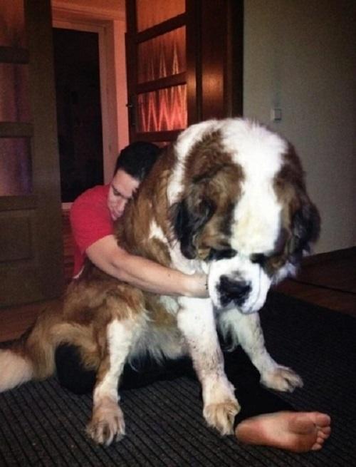6 lehetséges ok a kutya hirtelen súlyvesztésére   Kutyaválugaskonyhak.hu