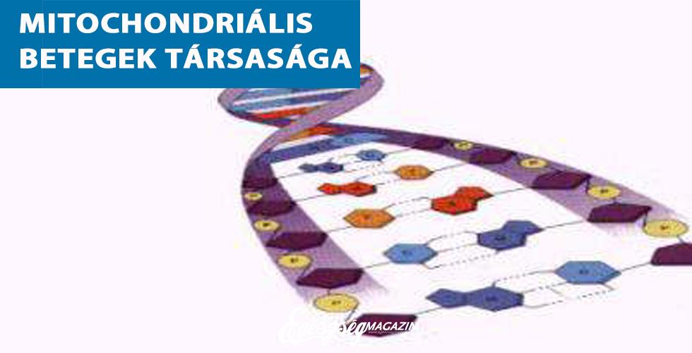 fogyás mitokondriumok)