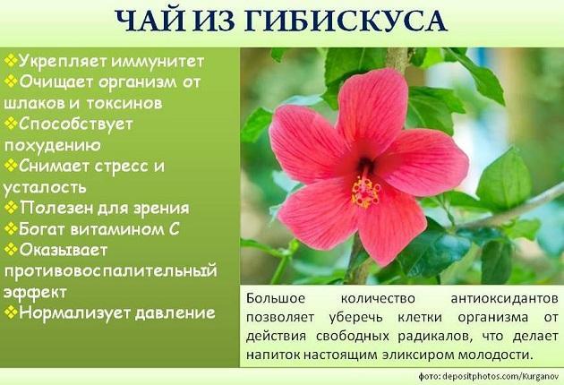 hibiszkusz a fogyáshoz)