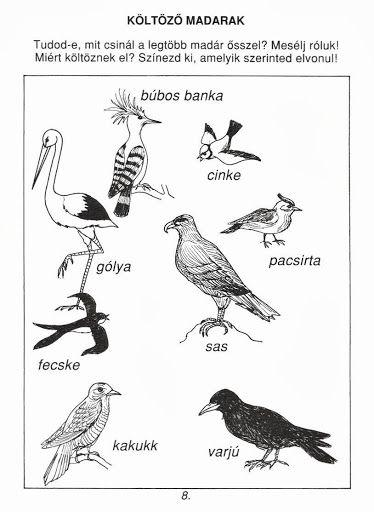 Emberi kakuk parazitái