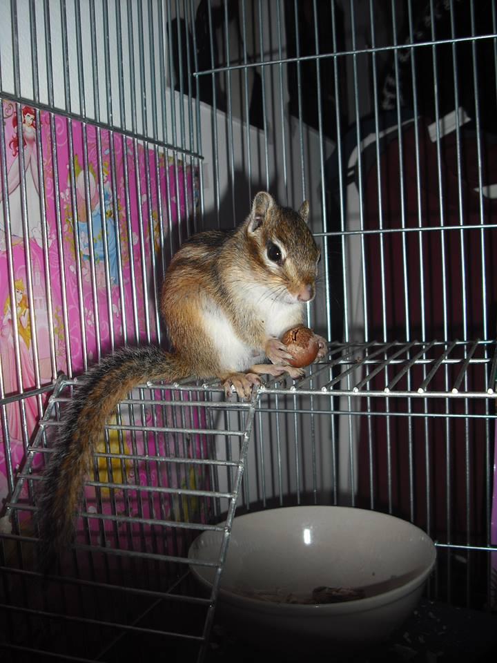 mókus fogyás