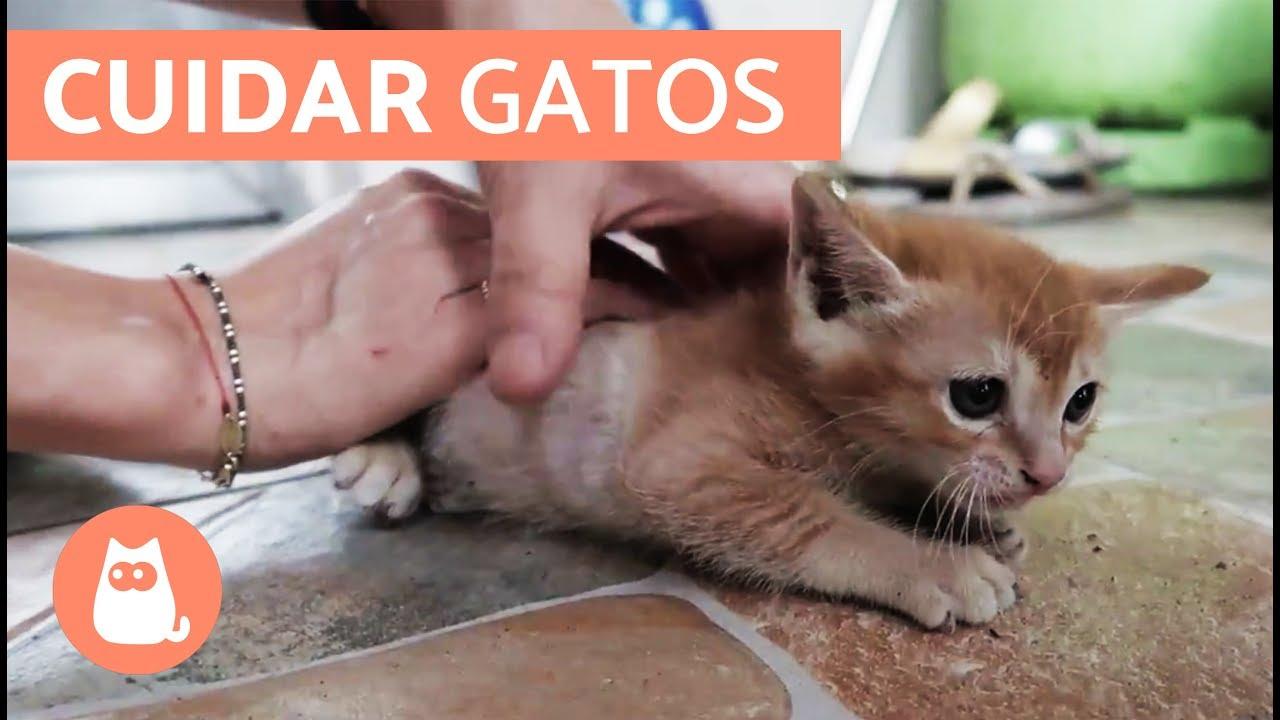 Fogyás los gatos, Gáspár Laci fogyása: 1 év alatt 23 kiló | Fogyás, Súly, Edzés