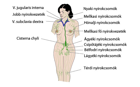 hogyan lehet elveszíteni a zsírt a lágyékban)