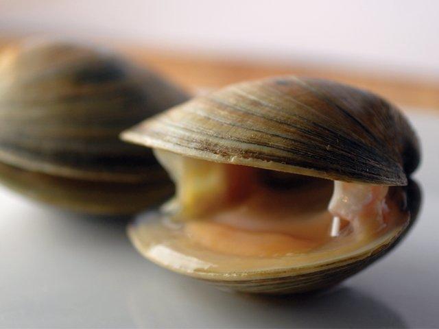 kagylók, amelyek rossz fogyásban vannak
