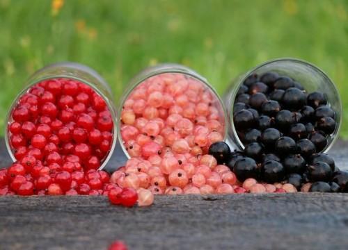 bogyók, amelyek segítik a zsírégetést)