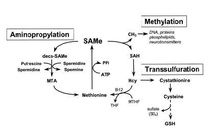 s- adenozil- l- metionin fogyás)