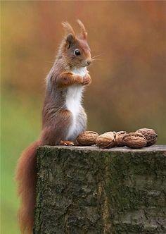 mókus fogyás hogyan ro fogyni könnyű