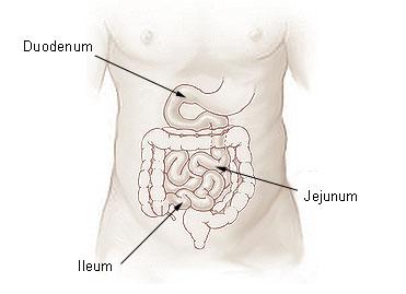zsírégetés fogyás rutin lfrv fogyás