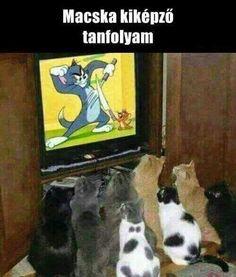 karcsúsító macskák)