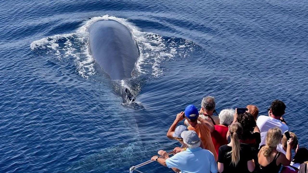 mentse a bálnák fogyni