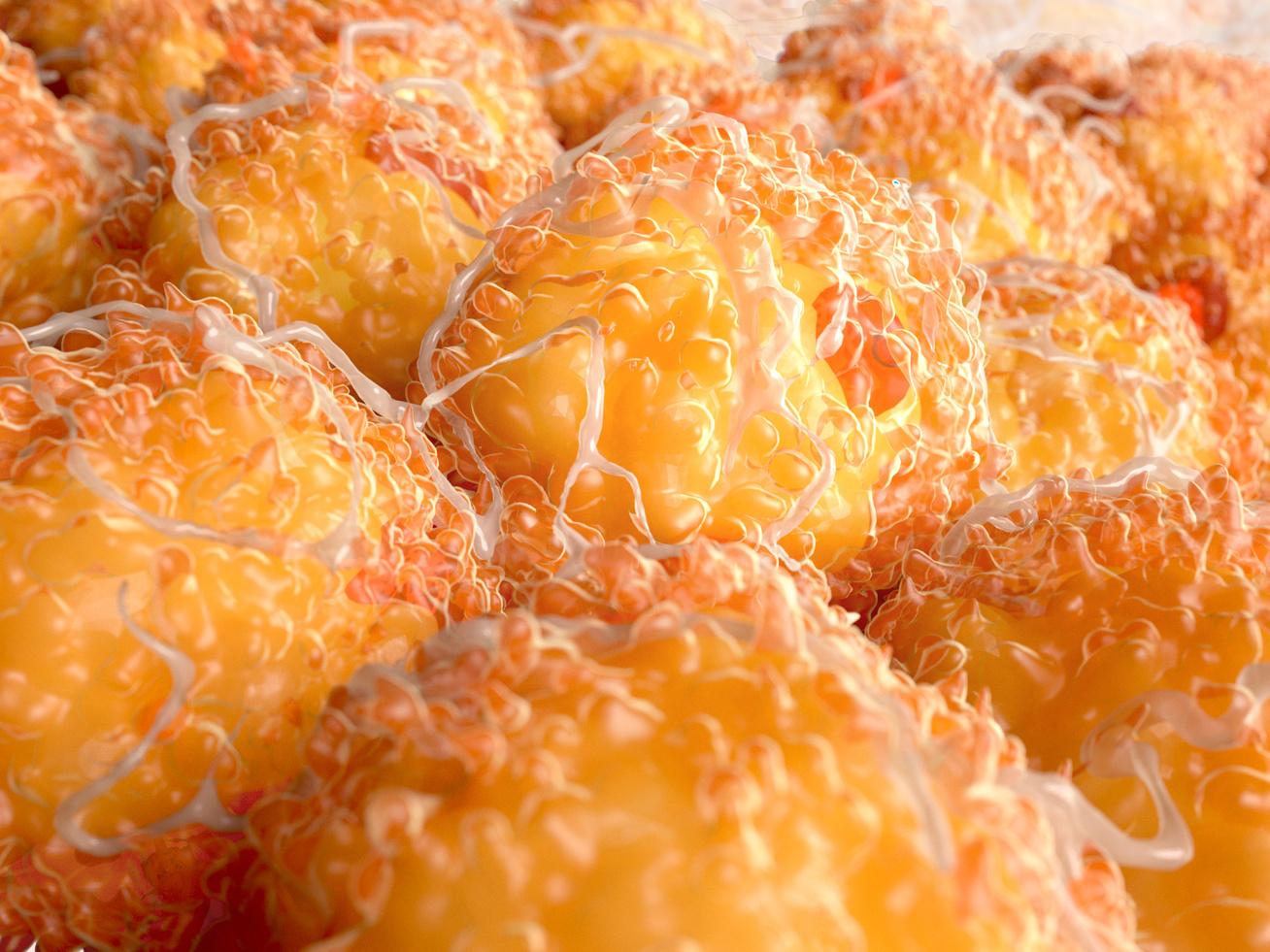 mit lehet enni, hogy zsírt éget?