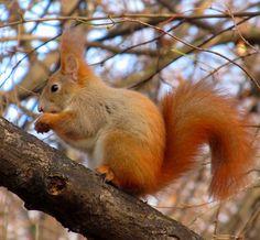 mókus fogyás)