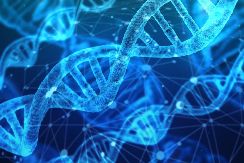 ősi DNS fogyás)